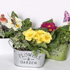 Kauniit valmiit istutukset Kevätmarkkinoilta itselle tai lahjaksi