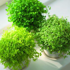 Suloiset vehreät kodinonnet tuovat kevään kotiisi