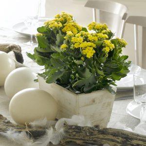 Kauniit keltaiset ja oranssit tulilatvat pääsiäiskotiin