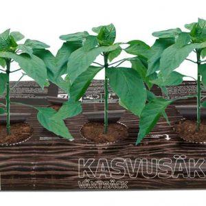 Biolan kasvatussäkissä kasvatat vihannesten taimet, salaattia, yrttejä tai kesäkukkia