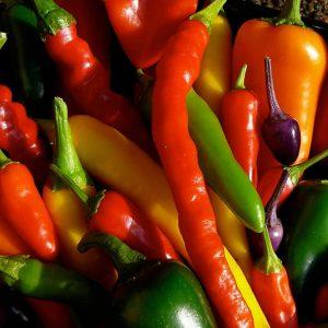 Chilejä on helppo kasvattaa myös kotona sisällä, kesällä parvekkeella, puutarhassa tai kasvihuoneessa