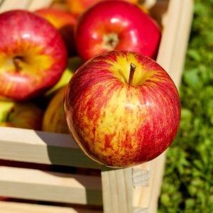 Omenapuista löytyy kesälajikkeita, syyslajikkeita ja talvilajikkeita, kaikki kotimaisia