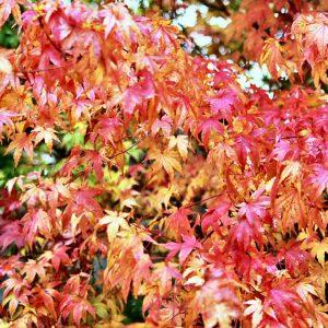 Syksyllä kannattaa aloittaa syyslannoitus ajoissa, jotta kasvit ehtivät valmistautua tulevaan talvilepoon