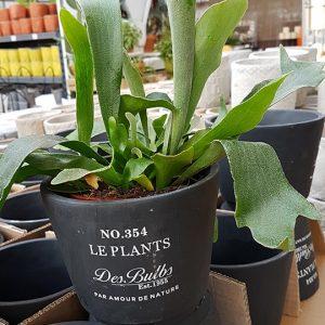 Le Plants suojaruukku