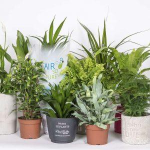 Viherkasvit mummolafiilistä ja ilmanraikastajia