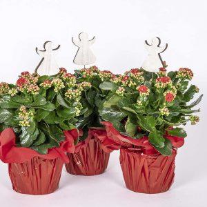 Upeat kotimaiset oman tuotantomme koristellut punaiset tulilatvat itselle tai tuliaisiksi