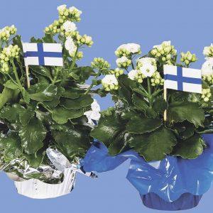 Itsenäisyyspäiväksi kotimainen oman tuotantomme koristeltu valkoinen tulilatva