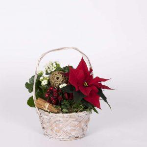 Myymälöissämme tuhansittain valmiita istutuksia jouluksi joko omaan kotiin tai lahjaksi
