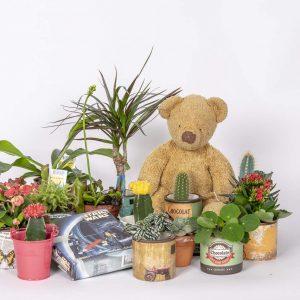 Pirilän Kukkatalon kevätmarkkinoilla minikasveja eli viherkasveja, kukkivia, kaktuksia ja mehikasveja sekä lihansyöjäkasveja tarjoushintaan
