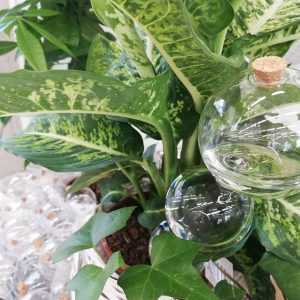 Tyylikkäät lasiset kastelupallot kolmessa koossa