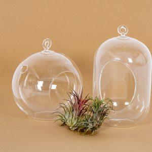 Ilmakasveja kasvatat ilman multaa helposti vaikka lasisissa palloissa