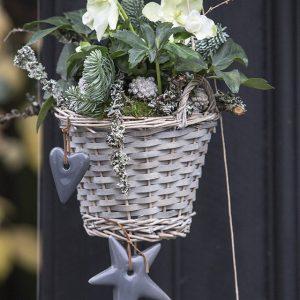 Ihastuttava ja suosittu jouluruusu viihtyy viileässä ja se voidaan istuttaa keväällä ulos