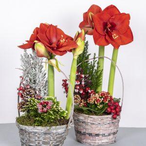 Kukkatalossa runsas valikoima valmiita istutuksia modernista perinteiseen